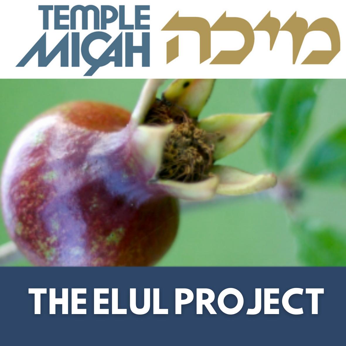 The Elul Project